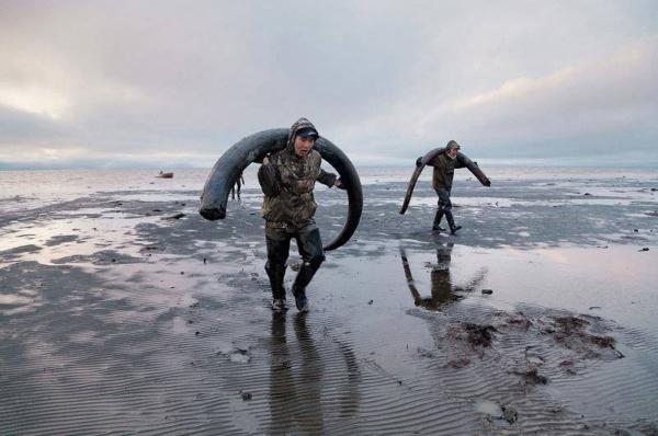 Découverte des défenses de mammouth en Sibérie